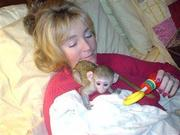 NBNMH Adorable Twin Pygmy Marmoset and Capuchin 07031957695